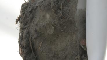 Robe Poussiere-accessoires2